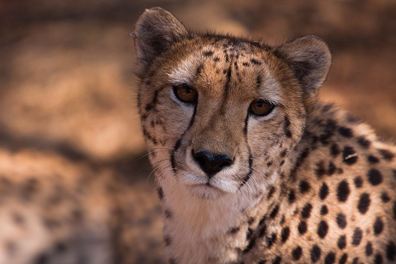 Cultural and historical attractions | Wild life Pretoria