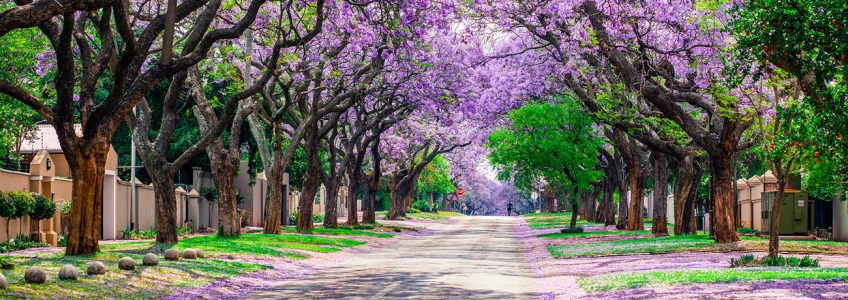 5 awesome things to do in Pretoria